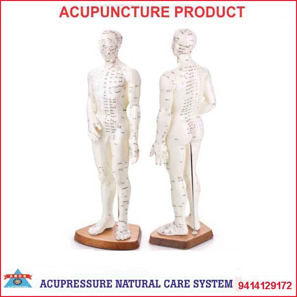 Acupuncture Model-Human Body Male Single 50cm