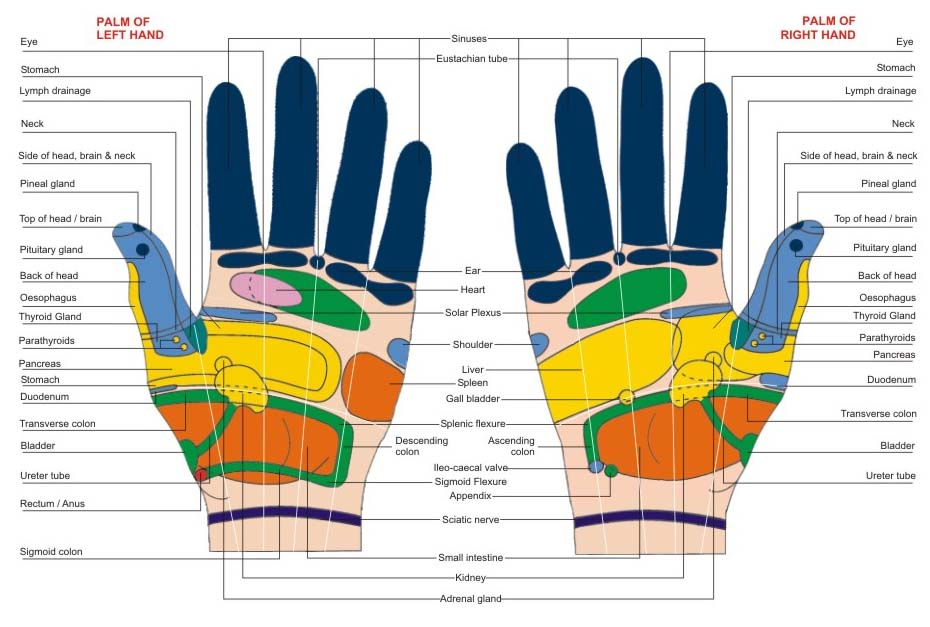 Reflexology Colour Visiting Chart Hand-100pc