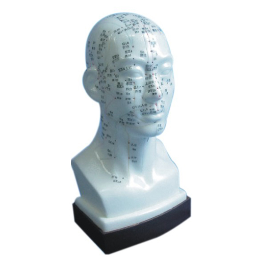 Acupuncture Model - Head  - 1104